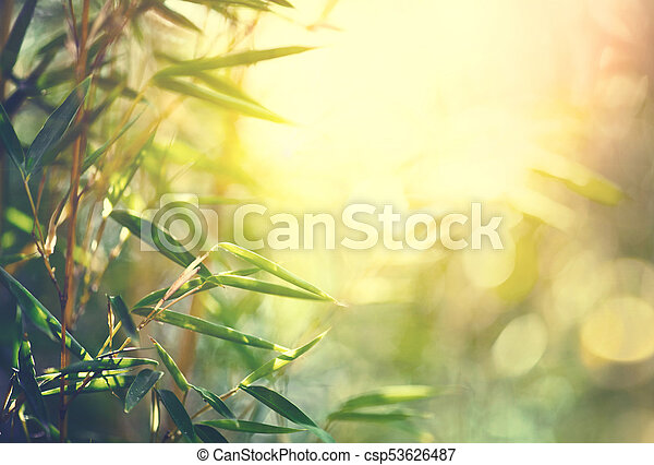 Bamboo forest. Growing bamboo in japanese garden - csp53626487