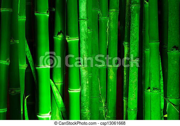 Bamboo forest - csp13061668