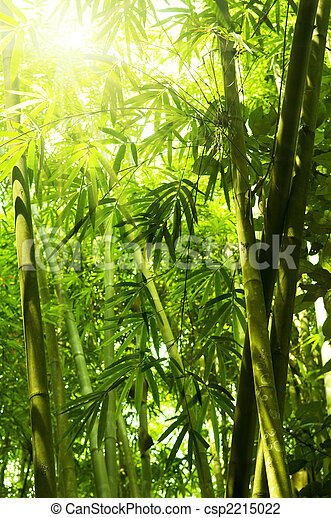 Bamboo forest. - csp2215022