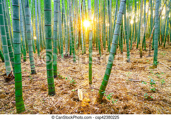 Bamboo forest with sunny in morning - csp42380225