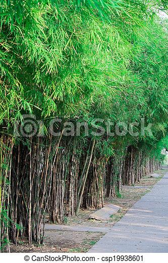 Bamboo groove - csp19938601