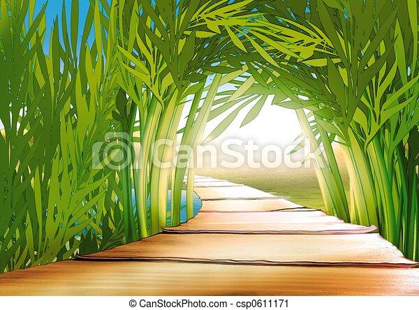 Bamboo grove - csp0611171