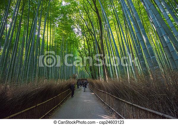 Bamboo grove in Arashiyama, Kyoto, Japan - csp24603123
