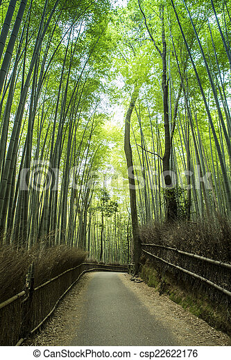 Bamboo Grove - csp22622176