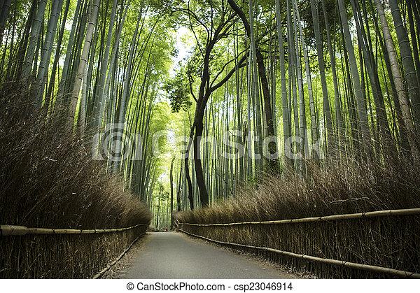 Bamboo grove - csp23046914