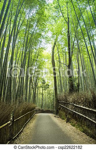 Bamboo Grove - csp22622182