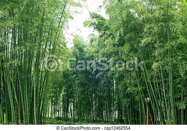 bamboo grove - csp12462554