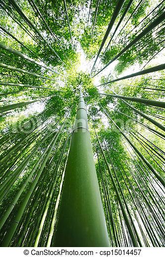 Bamboo Grove - csp15014457