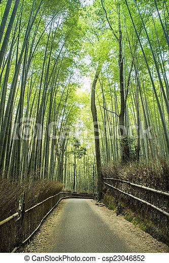 Bamboo grove - csp23046852