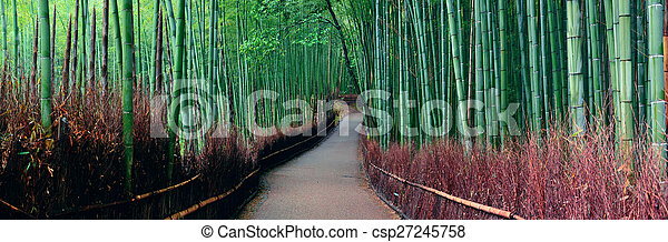 Bamboo Grove - csp27245758