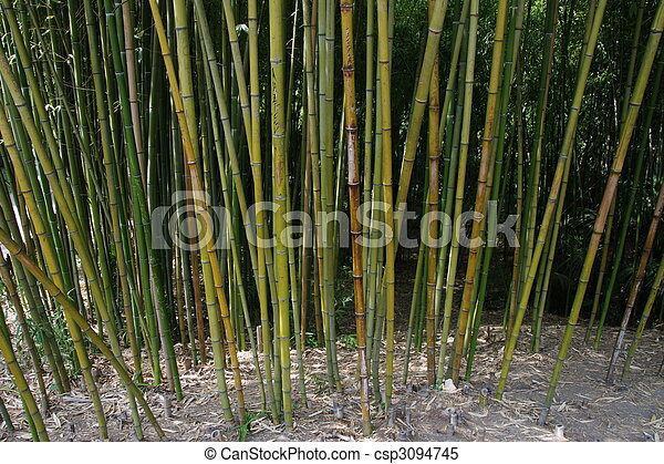 bamboo grove - csp3094745