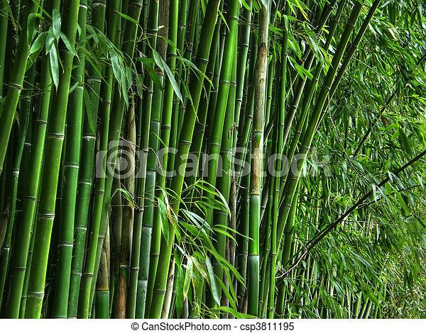 bamboo grove. - csp3811195