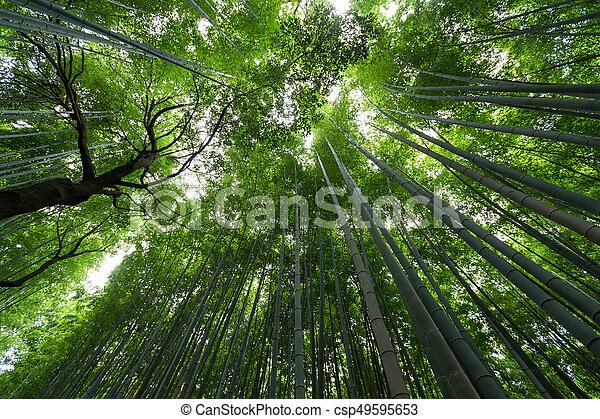 Bamboo grove - csp49595653