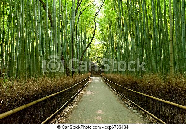 Bamboo grove - csp6783434