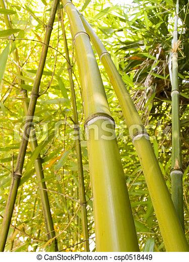 Bamboo grove - csp0518449