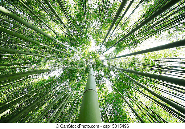Bamboo Grove - csp15015496