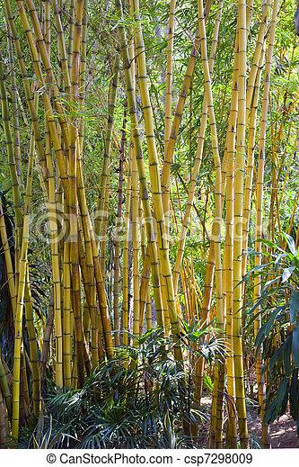 Bamboo grove - csp7298009