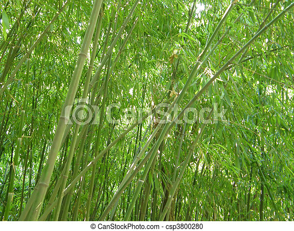 bamboo grove. - csp3800280