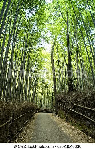 Bamboo grove - csp23046836