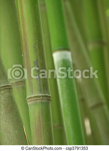 bamboo grove. - csp3791353