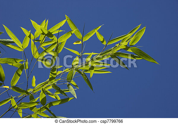 Bamboo leaves on blue sky - csp7799766