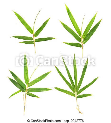 bamboo leaves - csp12342776