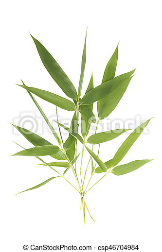 Bamboo leaves - csp46704984