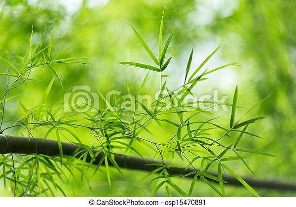 Bamboo leaves - csp15470891