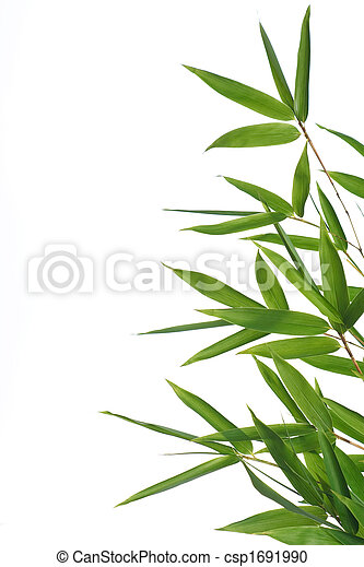 bamboo- leaves - csp1691990