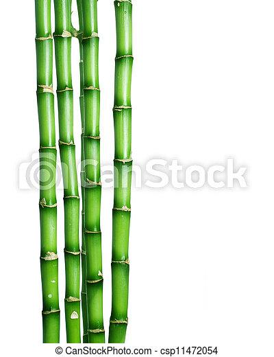 Bamboo over white  - csp11472054