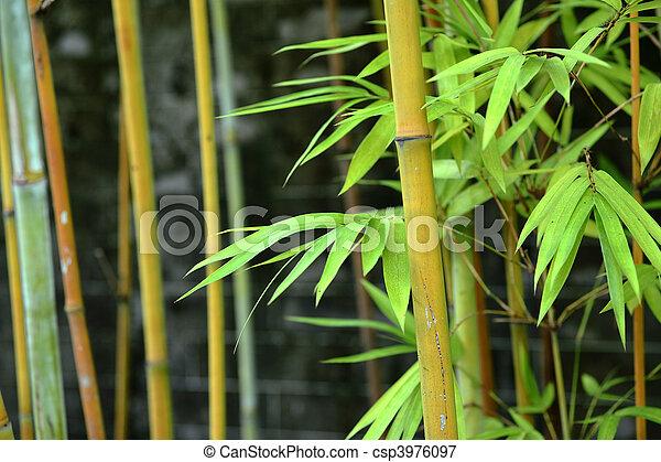 bamboo - csp3976097