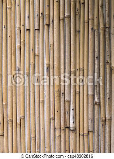 Bamboo - csp48302816