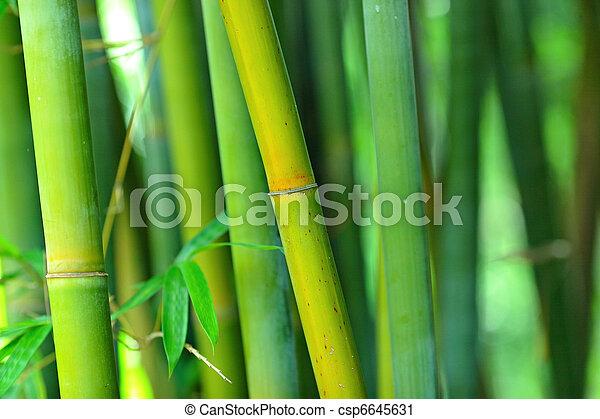 bamboo - csp6645631
