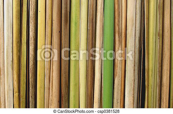 bamboo - csp0381528
