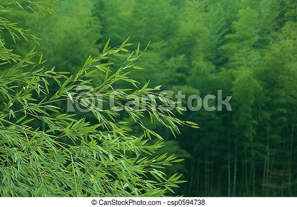 bamboo - csp0594738