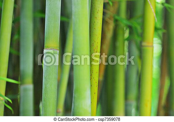 bamboo - csp7359078