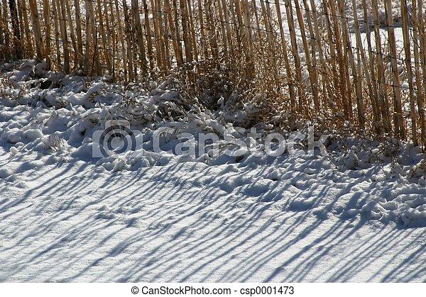 Bamboo Shadows 2 - csp0001473