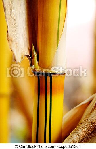 Bamboo shoot - csp0851364