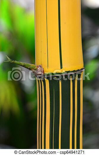 Bamboo shoot up close - csp64941271