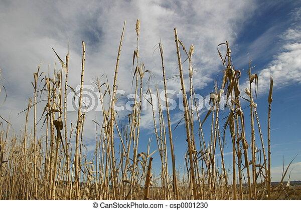 Bamboo Skies - csp0001230