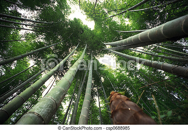 bamboo - csp0688985