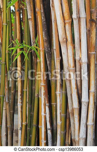 Bamboo. - csp13986053
