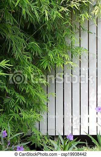 Bamboo - csp19938442