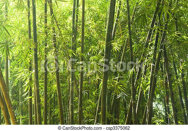 bamboo - csp3375062