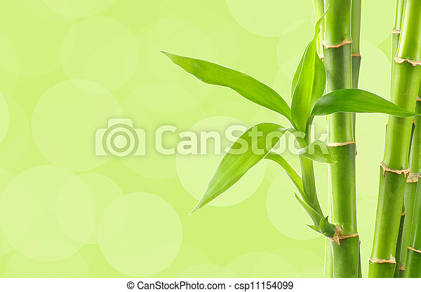 Bamboo - csp11154099