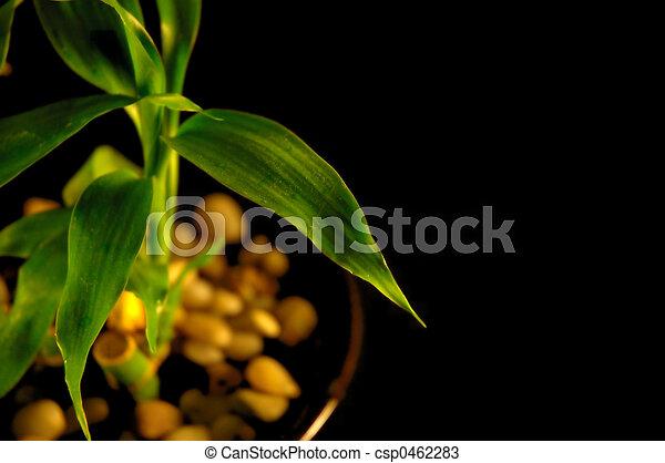 Bamboo - csp0462283