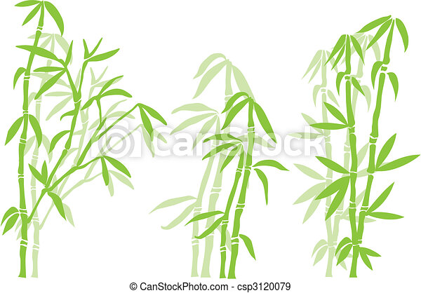 bamboo tree - csp3120079