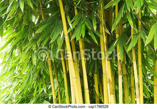 Bamboo tree - csp1796528