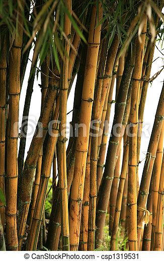 Bamboo trees - csp1319531