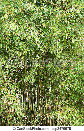 Bamboo trees - csp3479978